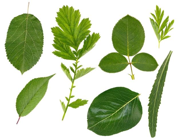 Lo strato piatto di foglie di varie piante è isolato su una superficie bianca.