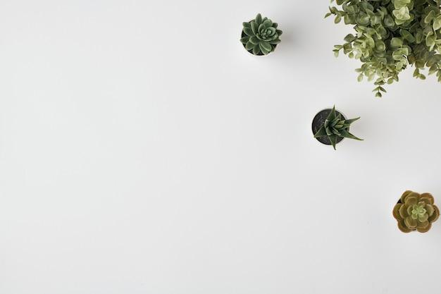 Disposizione piatta di piante domestiche in vasi da fiori con piccole foglie verdi e qualche altra vegetazione vicino contro uno spazio bianco