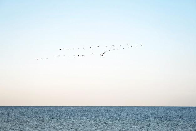Uno stormo di uccelli sul mare. migrazione stagionale degli uccelli verso le regioni più calde.