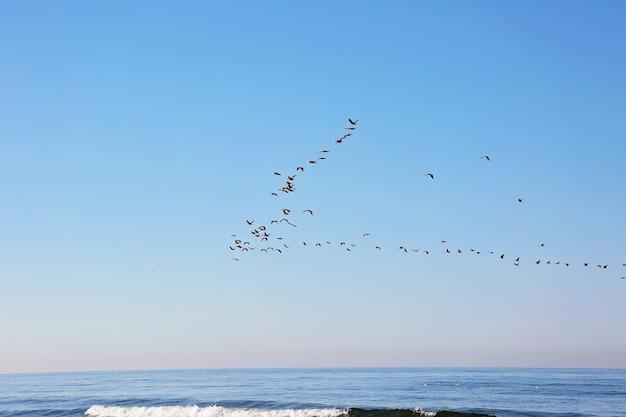 Uno stormo di uccelli migratori nel cielo sopra il mare. migrazione stagionale degli uccelli. messa a fuoco selettiva morbida.