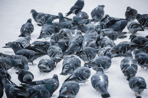 Uno stormo di piccioni nel parco invernale