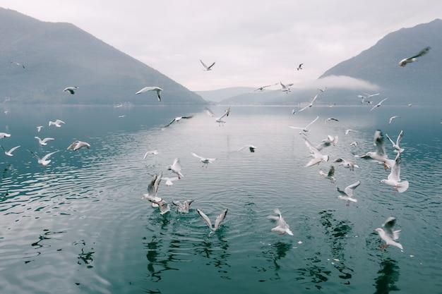 Stormo di gabbiani che volteggiano sopra l'acqua