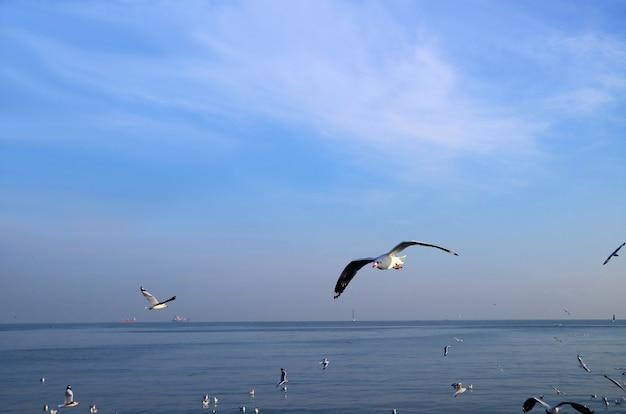 Stormo di gabbiani che volano liberamente sul mare blu