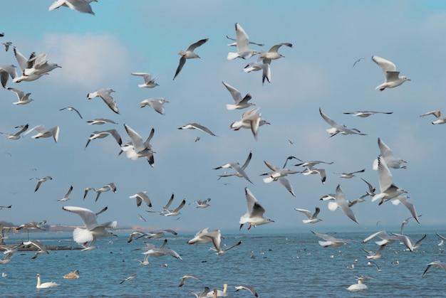 Stormo di gabbiani che volano sopra il mare.