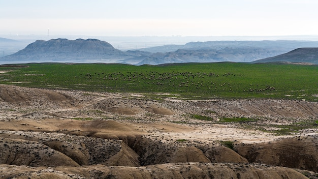 Un gregge di pecore al pascolo su una montagna