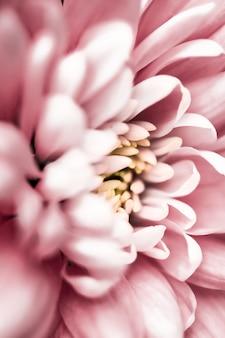 Flora branding e concetto di amore margherita rosa petali di fiori in fiore astratto floreale fiore arte backg...