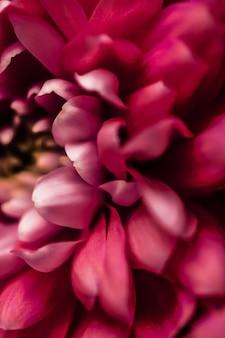 Flora branding e concetto di amore margherita rossa petali di fiori in fiore astratto floreale fiore arte backgr...