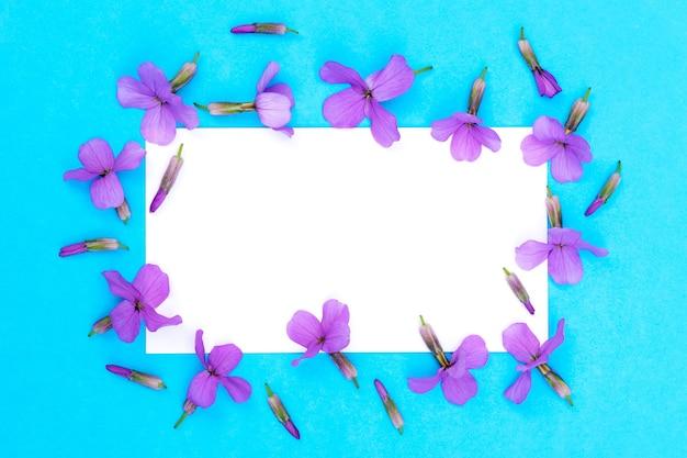 Composizione floreale di fiori di campo viola brillante su sfondo blu sotto forma di cornice con una carta bianca per il testo al centro