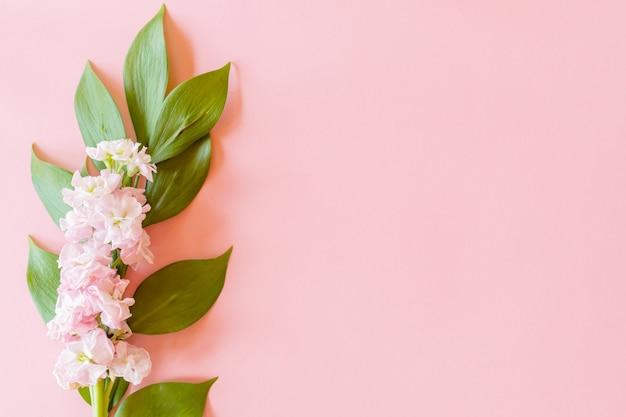 Composizione floreale su ramoscello di fuscus e fiore di matthiola su sfondo di carta rosa