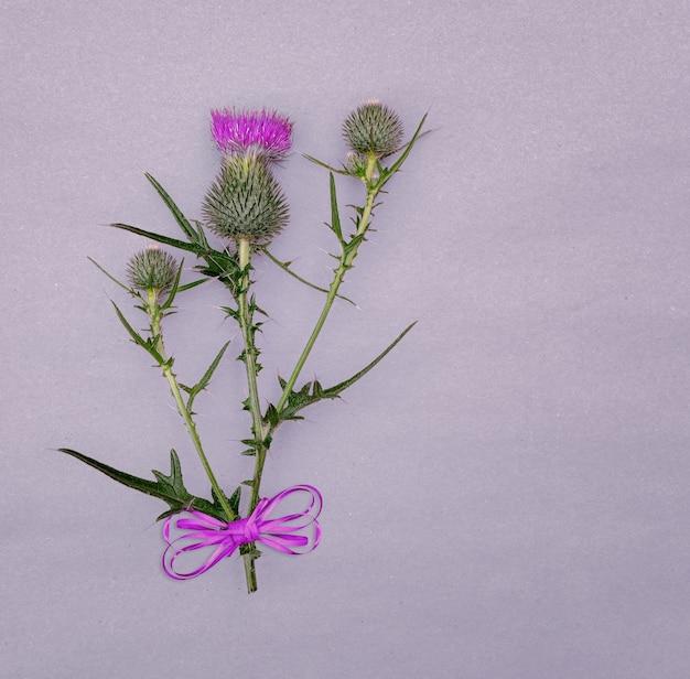 Composizione floreale di piante di campo spinose su uno sfondo grigio con un posto per il design.