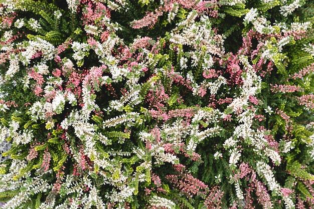 Sfondo floreale, sfondo naturale del fiore