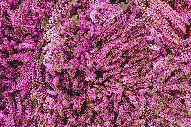 Sfondo floreale. fiori rosa misti. sfondo di fiori tropicali. concetto di giardinaggio domestico