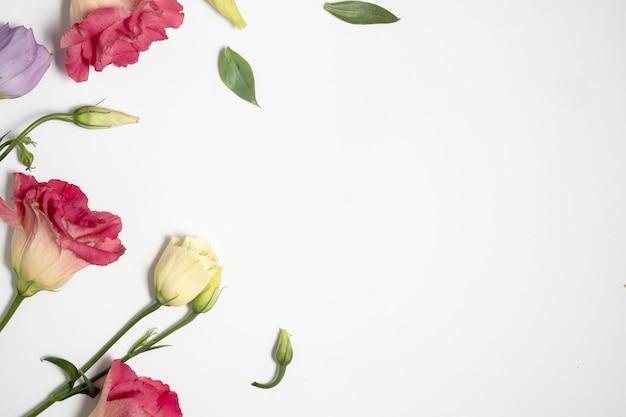 Sfondo floreale. bellissimi fiori delicati di eustoma. vista dall'alto e copia spazio.