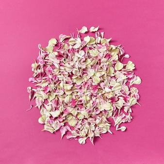 Composizione floreale da petali di garofano su carta magenta con copia spazio. sfondo naturale.