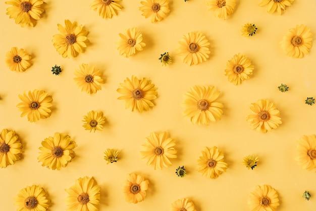 Composizione floreale con struttura del modello di boccioli di fiori margherita gialla su giallo