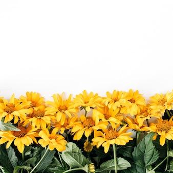 Composizione floreale con struttura del reticolo di fiori margherita gialla sulla superficie gialla