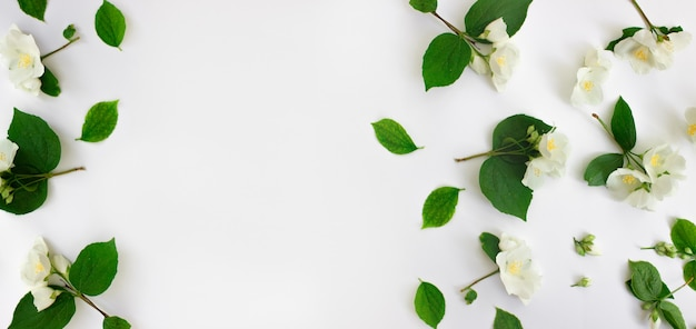 Cornice floreale fatta di fiori di gelsomino isolato su sfondo bianco cornice di fiori