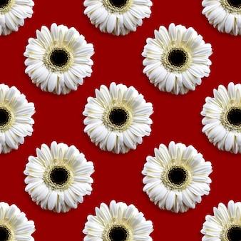 Modello senza cuciture con testa di gerbera floreale su sfondo rosso, vista dall'alto del fiore, composizione piatta
