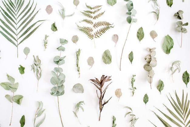 Motivo floreale fatto di eucalipto, foglia di palma, foglie verdi, rami su bianco