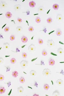 Motivo floreale fatto di fiori margherita camomilla bianchi e rosa, foglie verdi su fondo bianco