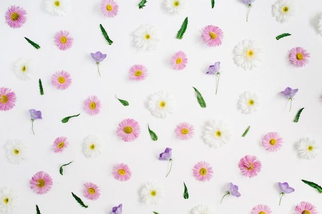 Motivo floreale di fiori margherita camomilla bianchi e rosa, foglie verdi su fondo bianco.