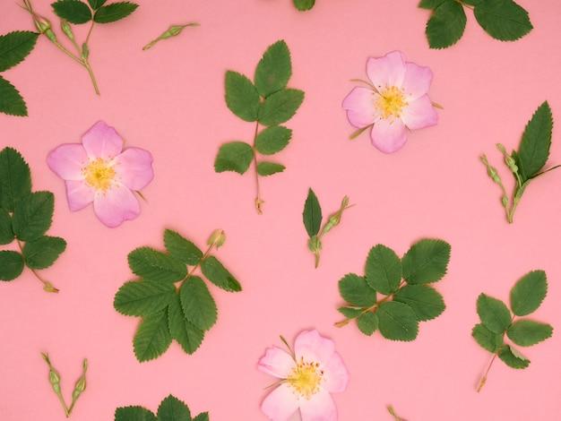Motivo floreale di rose selvatiche rosa su sfondo rosa.