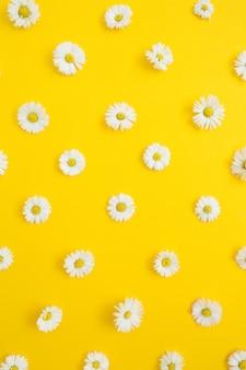 Motivo floreale di fiori margherita camomilla bianca su giallo