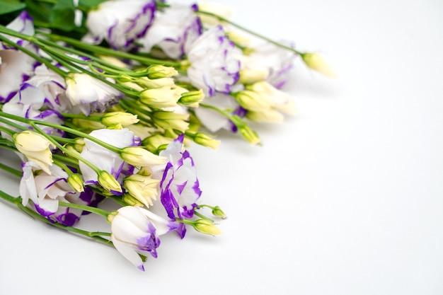 Composizione romantica floreale. la primavera fiorisce le rose del cespuglio su una priorità bassa bianca Foto Premium