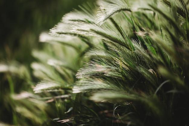 Sfondo floreale primavera estate. primo piano dell'erba in un campo sulla natura. immagine artistica colorata, spazio di copia gratuito