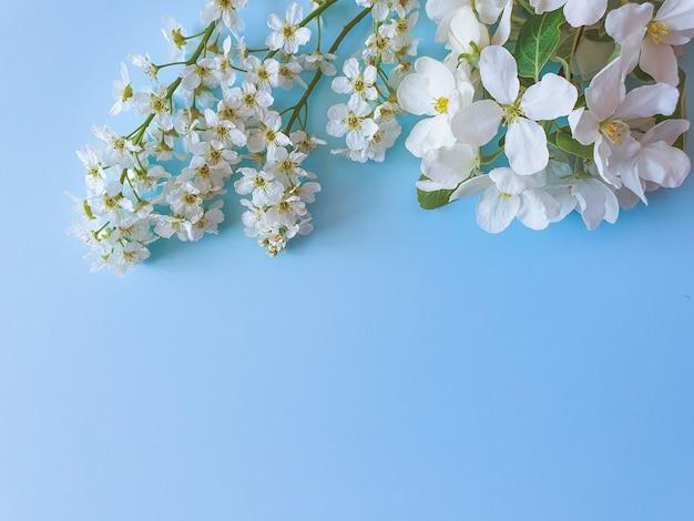 Bordo superiore floreale di fiori bianchi delicati sul tavolo blu pastello. cornice floreale, piatto laico, vista dall'alto.