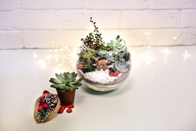 Florarium - composizione di piante grasse, pietra, sabbia e vetro, elemento di interni, decorazioni per la casa, deror natalizio, regalo di capodanno