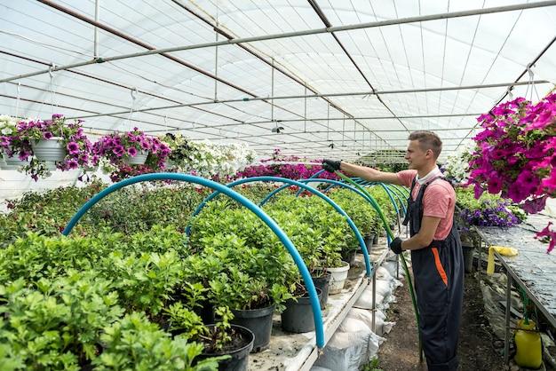 Acque di fiorista con tubo flessibile fiori di colore diverso in serra industriale