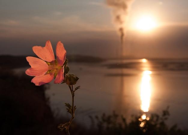Fiore contro un tubo fumante vicino al lago nel cielo della sera.