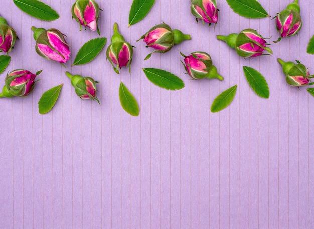 Composizione floreale di boccioli di rosa luminosi su sfondo viola con spazio di copia per il design