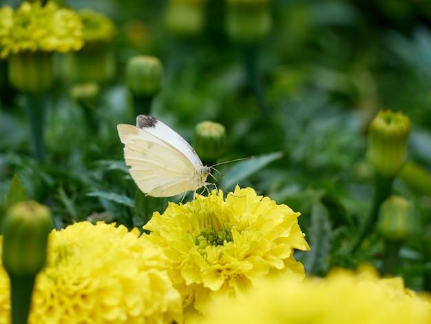 Aiuola con fiori gialli