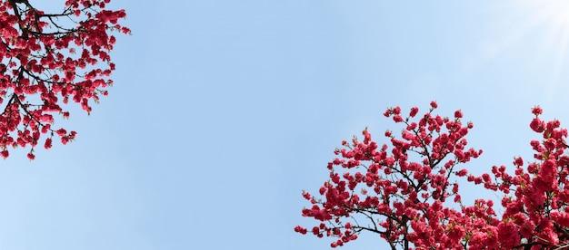 Fiore del fiore in primavera contro il cielo blu Foto Premium
