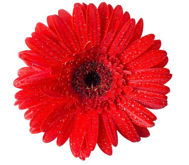Boccioli di fiori di diversi colori su una superficie bianca con gocce d'acqua sui petali
