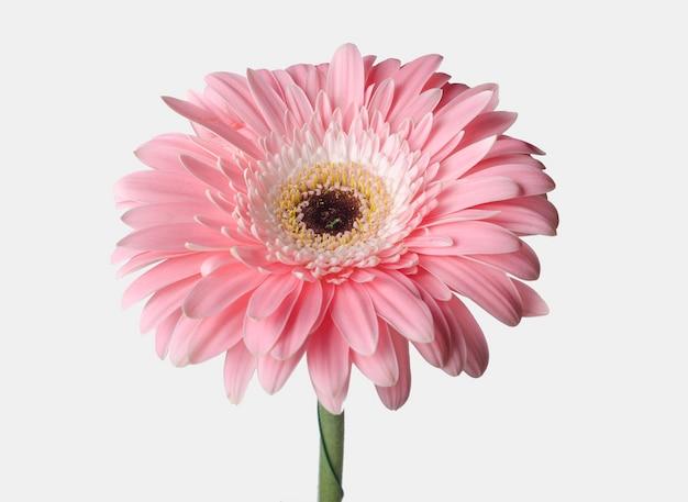 Boccioli di fiori di diversi colori su una superficie bianca.