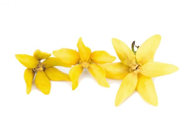 Fiore che si arrampica ylang-ylang, arrampicata sulang-ilang, manorangini, hara-champa kantali champa