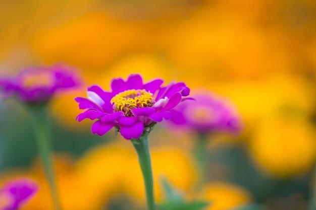 Fiore in giardino