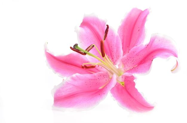 Giglio di fiori