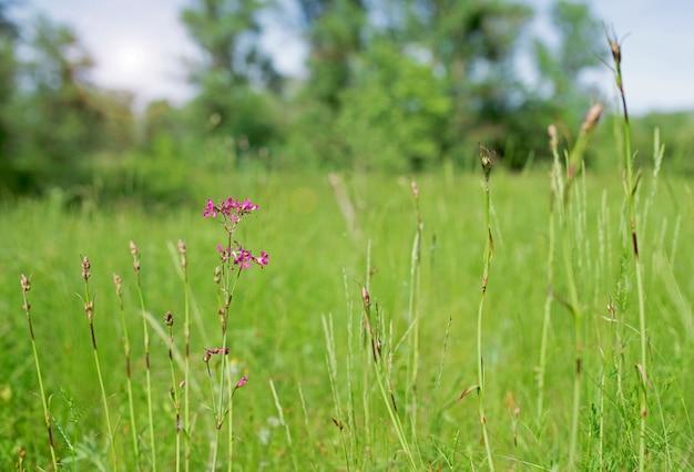 Prato fiorito in estate con diversi fiori colorati.