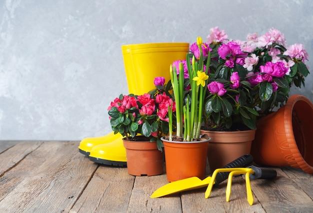 Sfondo di invasatura di fiori con fiori e attrezzi da giardino.