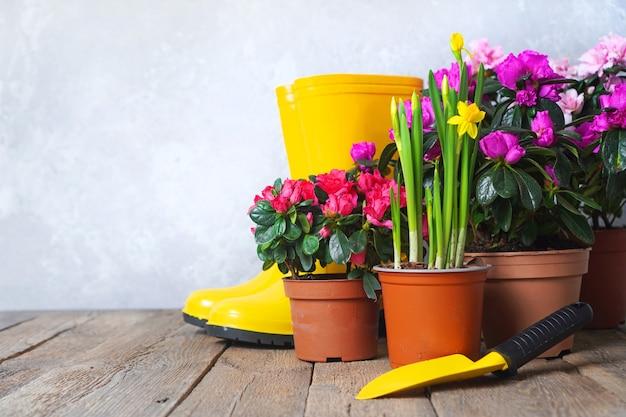 Invasatura di fiori e sfondo paesaggistico con fiori e attrezzi da giardino. sfondo con copia spazio.