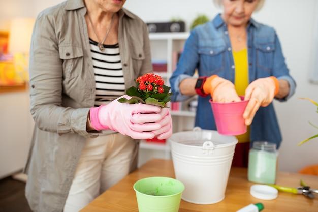 Invasatura di fiori. messa a fuoco selettiva di un fiore in mani femminili mentre è pronto per essere messo in un altro vaso