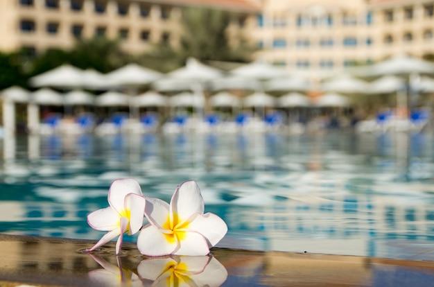 Fiore sulla piscina