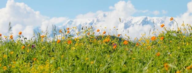 Prati alpini fioriti su uno sfondo di montagne innevate, viaggi estivi