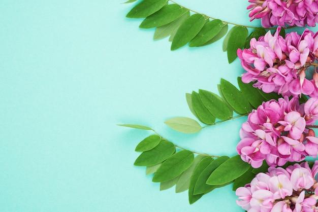 Ramo di fioritura robinia neomexicana con fiori rosa, foglia verde su sfondo verde