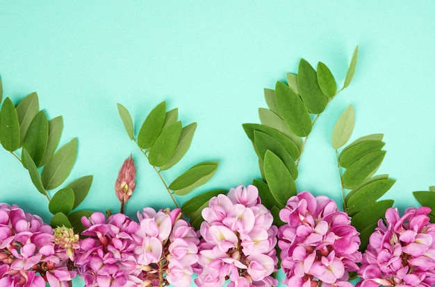 Ramo fiorito robinia neomexicana con fiori rosa, foglia verde