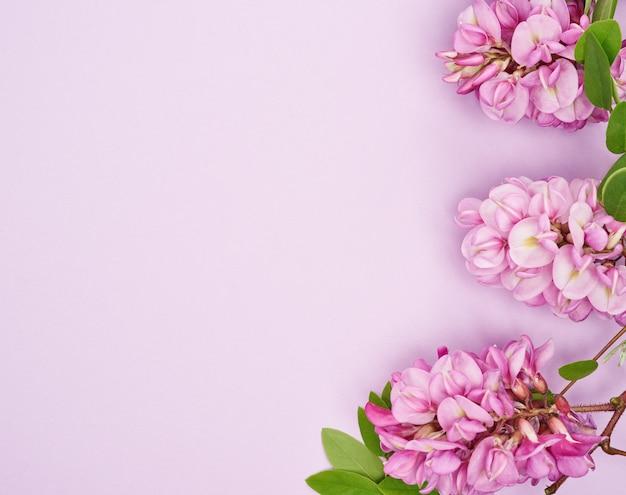 Ramo fiorito robinia neomexicana con fiori rosa su uno spazio viola